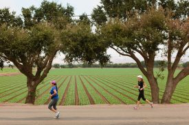 Salinas Valley Half Marathon Returns After 2016 Cancellation Due to Fire Conditions