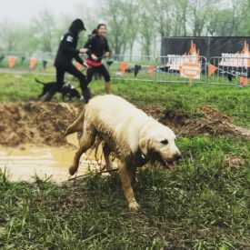 Tough Mudder Launches 10-City Ruff Mudder Event for Dogs